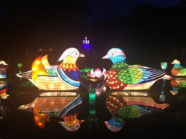 The Chinese Garden Lantern Festival was beyond beautiful