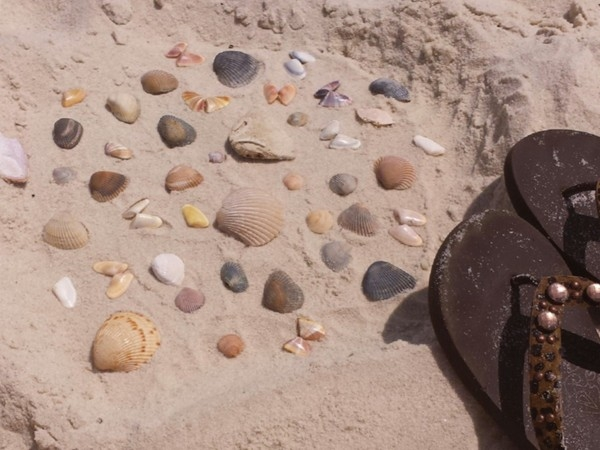 Seashell Art - What a way to spend a few hours, collecting seashells and playing in the sand!