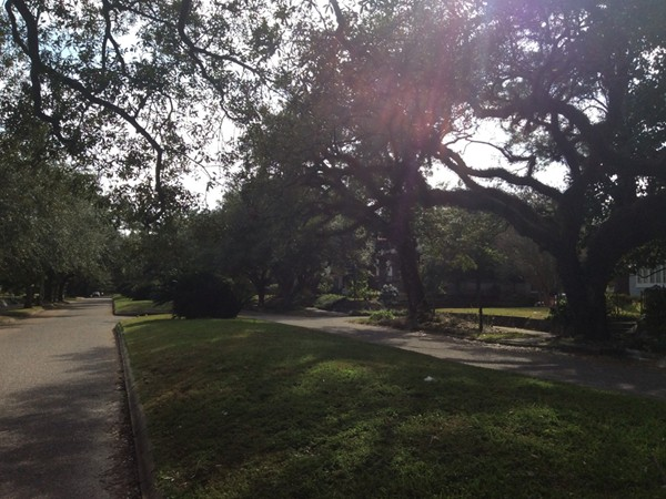 Street scene of McDonald Ave. Gorgeous oaks line the street with center islands