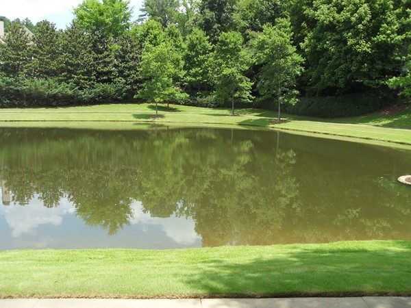 Beautiful pond and scenery in this subdivision