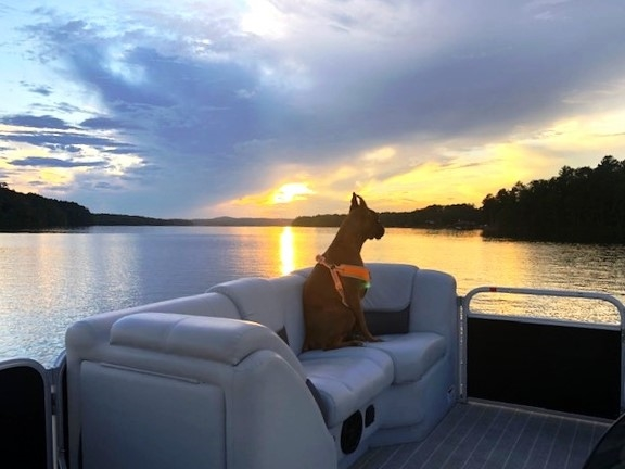 Dogs and sunsets!  What more could you ask for on Lake Wedowee