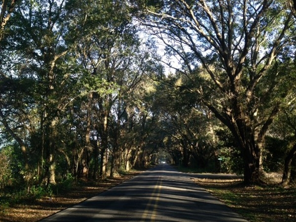 Thompson Hall Road boasts a canopy of large oaks