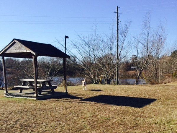 Take your dog for a walk or have a picnic by the lake at Harper Creek