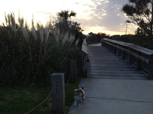 A sunset dog walk on the boardwalk at Grand Caribbean