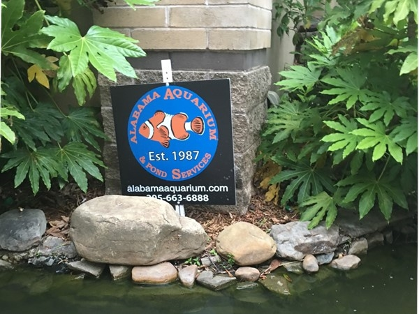 Alabama Aquarium and Pond Services, located at The Village at Lee Branch.  Est 1987