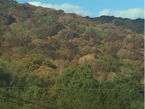 Beautiful views of autum leaves on Monte Sano on the way to work