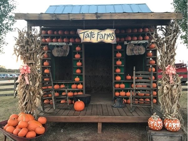 Perfect spot for a family photo at Tate Farms Pumpkin Patch in Meridianville