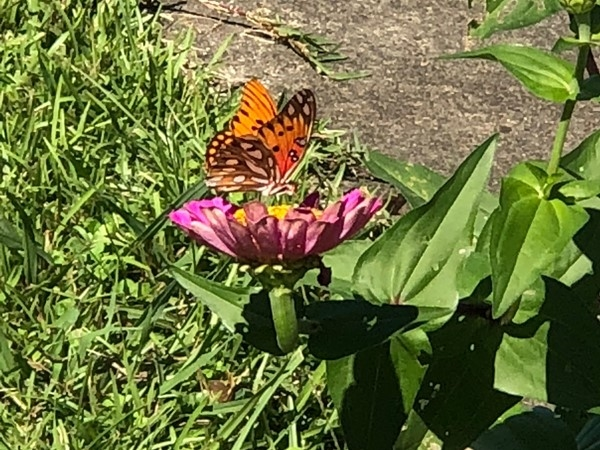 Nothing says spring more than this beautiful butterfly!  Lake Wedowee is blooming