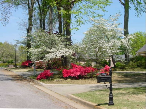 I think Dogwoods and Azaleas in full bloom are the most beauty at Indian Trace subdivision.